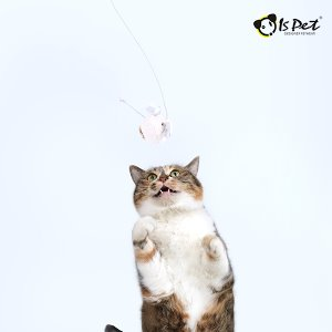 【ISPET】CAT TEASER